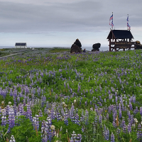 Islandija je bila nekoč precej poraščena z gozdovi, ki pa danes pokrivajo le odstotek njenega površja. Najbolj razširjena flora na otoku so mahovi in lišaji, uspeva pa tudi mnogo cvetočih rastlin. Širna prostranstva prekriva arktični volčji bob, ki so ga na otok prenesli iz Severne Amerike, saj pomaga preprečevati erozijo.