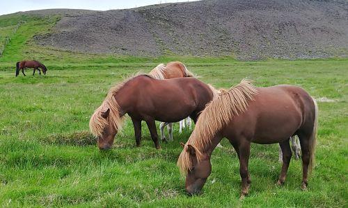 #Potopis: 2600 kilometrov po Islandiji