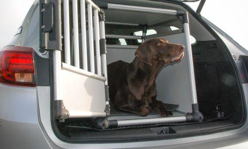 AMZS test pripomočkov za varen prevoz psov