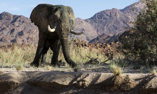 Divja Afrika